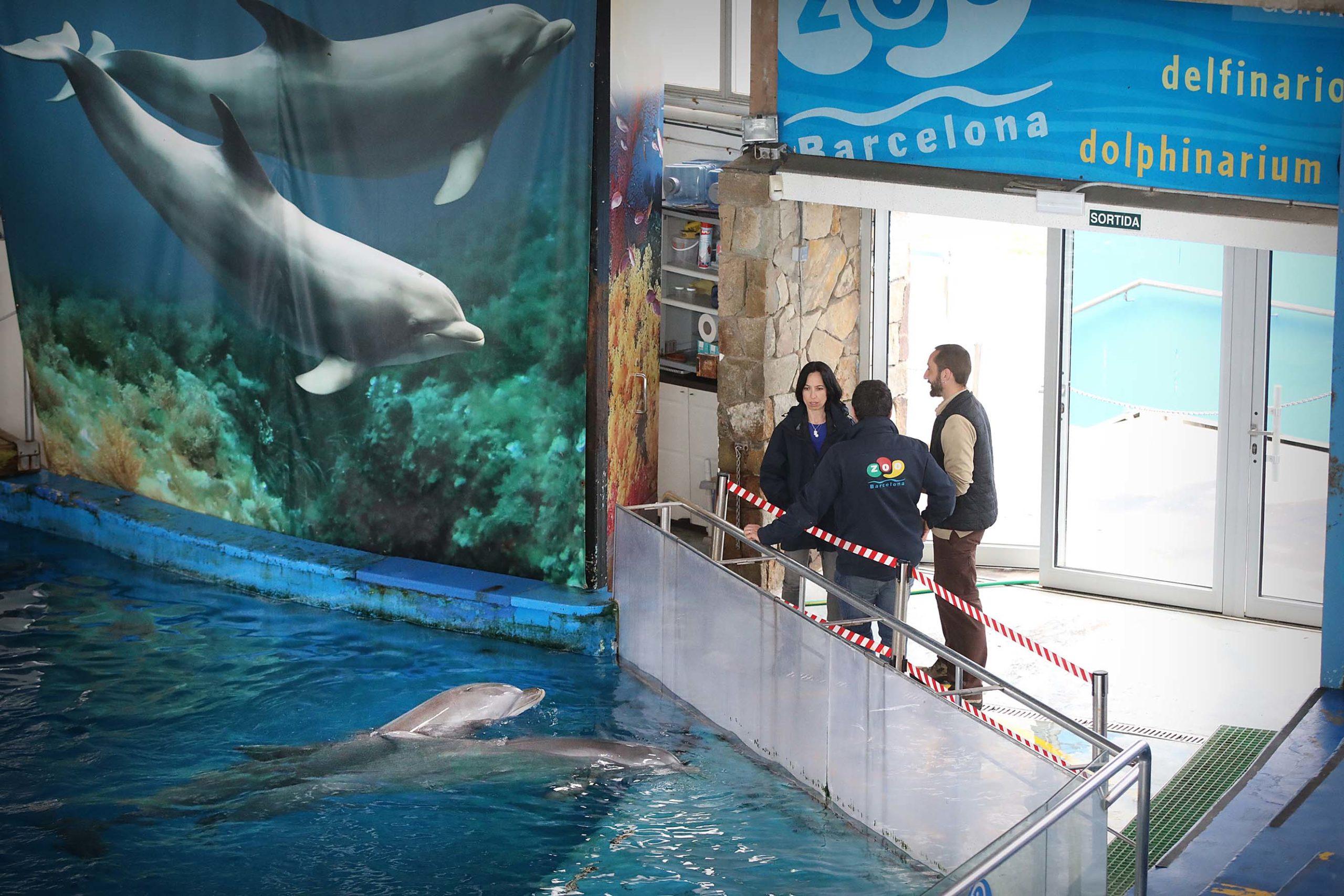 Tres cuidadors i dos dofins al delfinari de Barcelona, aquest febrer / Jordi Play