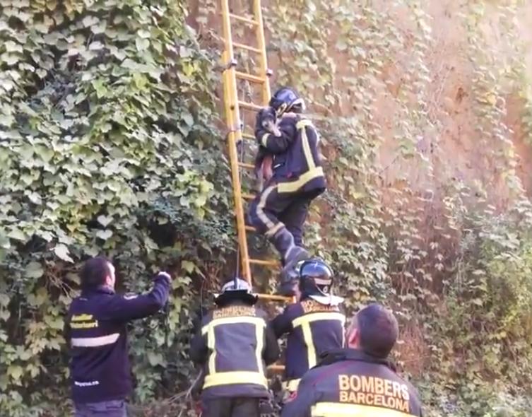 El gos, rescatat pels bombers de Barcelona | Guàrdia Urbana de Barcelona