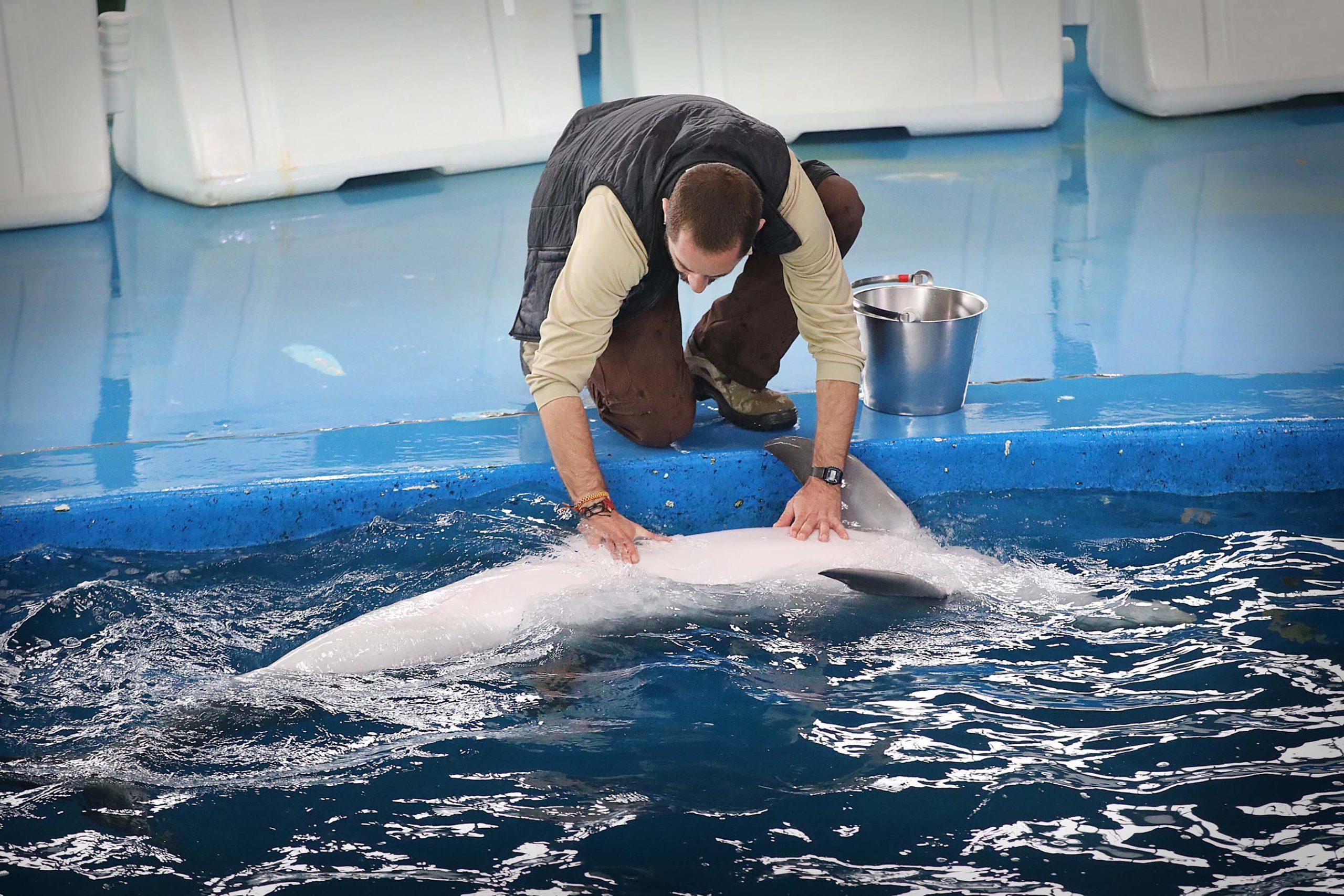 Un cuidador acariciant un dels dofins del Zoo de Barcelona / Jordi Play