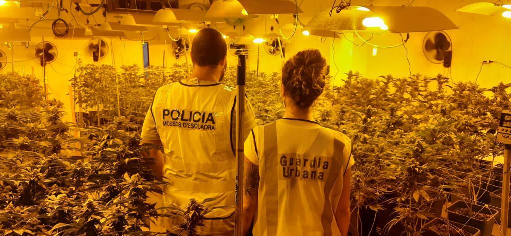 Un agent de Mossos i una de la Guàrdia Urbana, durant la intervenció en l'immoble de Sant Martí on s'amagava la marihuana / GUB